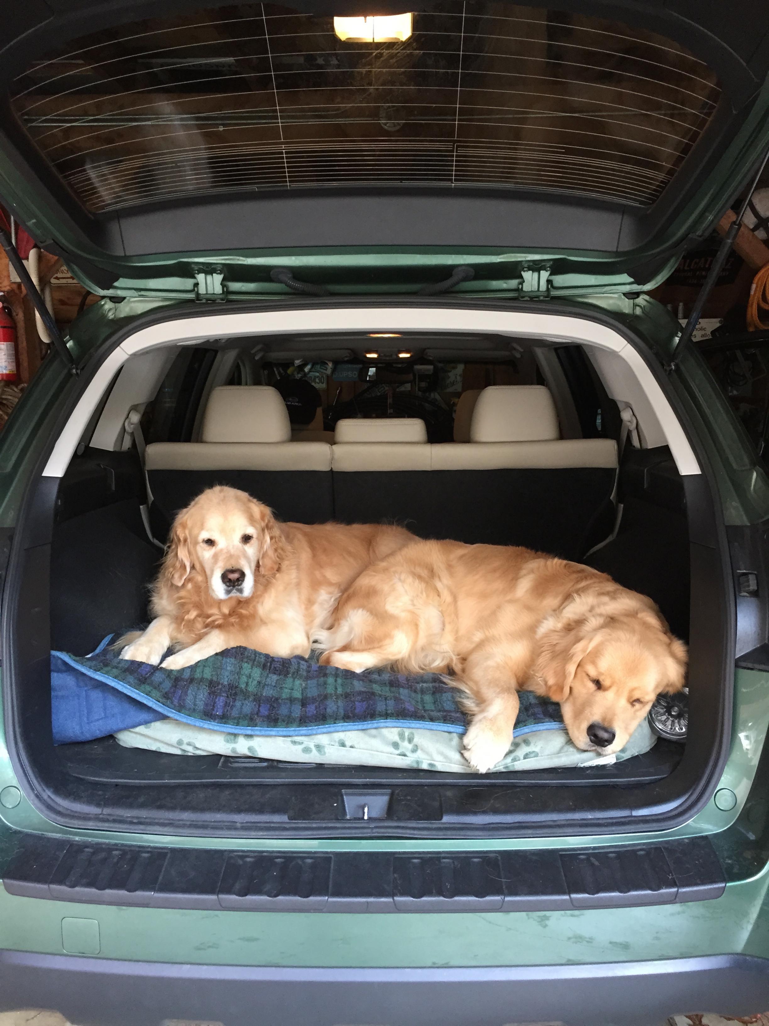 Big Dogs in 15 outback - Page 2 - Subaru Outback - Subaru ...