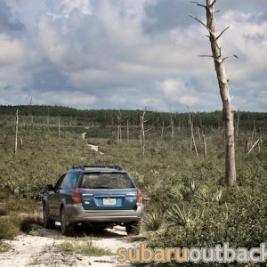 OB in Ocala National Forest