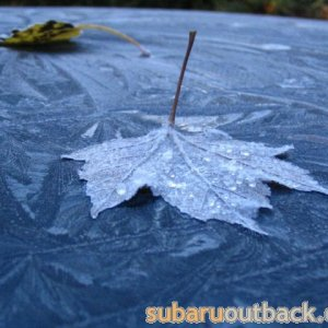 leaf on top of car