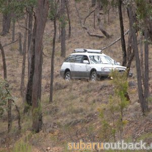 Suby in the Aussie Bush