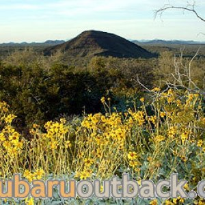 Brittlebush and small mountain at Pinacate biosphere in Mexico.